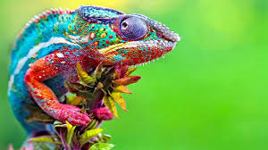 A Chameleon In A Smarties Box. A Story In A Flash By Marcus Van Wyk